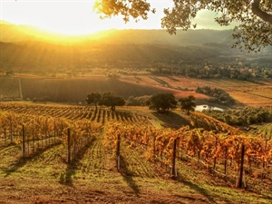 retire in Sonoma Valley Wine Country
